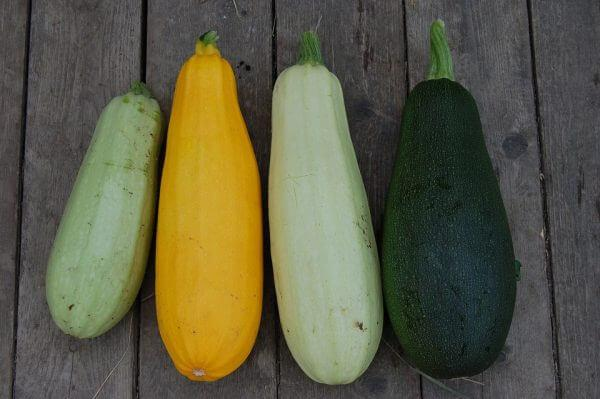 Courgettes with breastfeeding